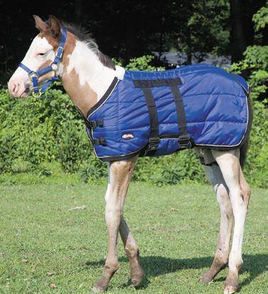 Weaver 420D Foal Stable Blanket