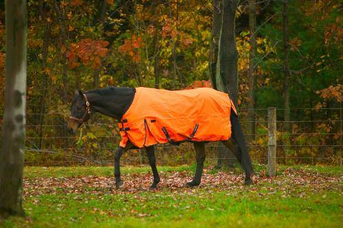 TuffRider 600D Turnout Blanket