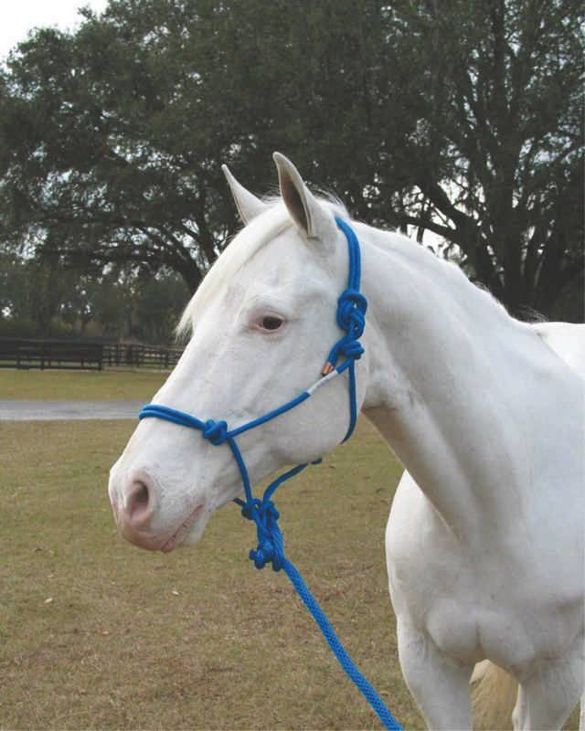 Hamilton Knotted Rope Halter With Matching Lead For Horses