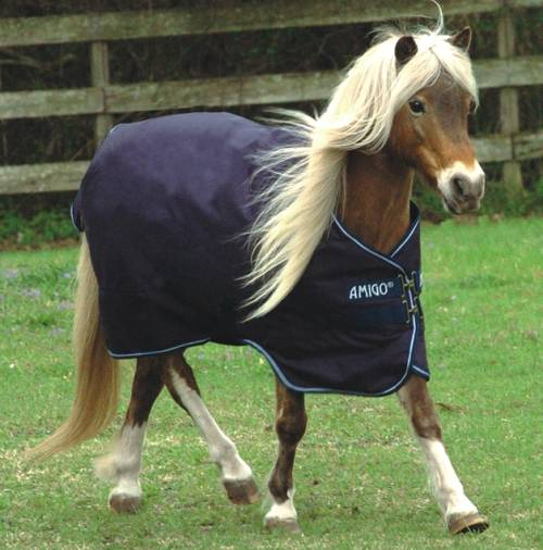 Amigo Pony Heavyweight Turnout Blanket