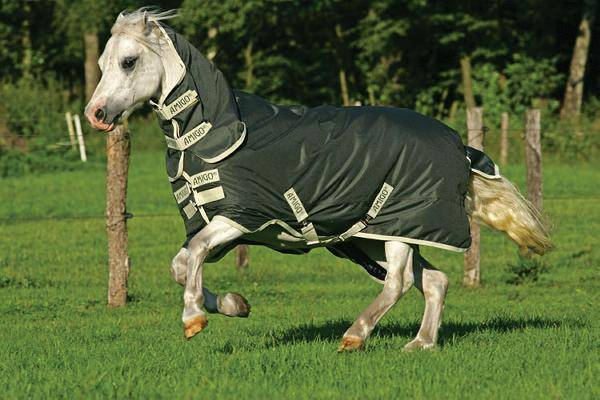 Amigo Pony MW Turnout Blanket