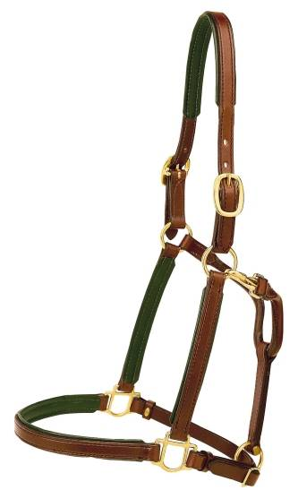 TORY LEATHER 3/4'' Padded Halter with Brass Hardware