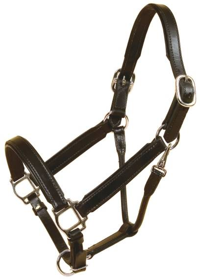 TORY LEATHER Bridle Leather Padded Halter with Nickel Hardware