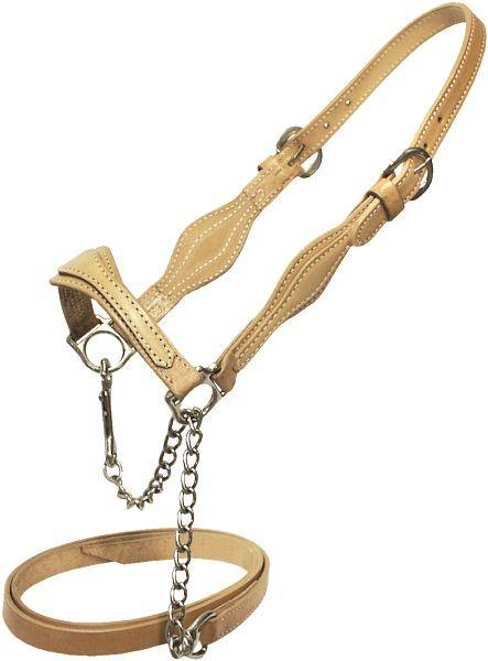 abetta cattle show halter on lovemypets.com