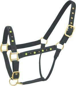 Abetta Nylon Halter with Color Studs
