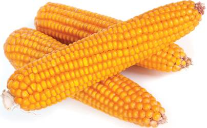Red River Corn On The Cob