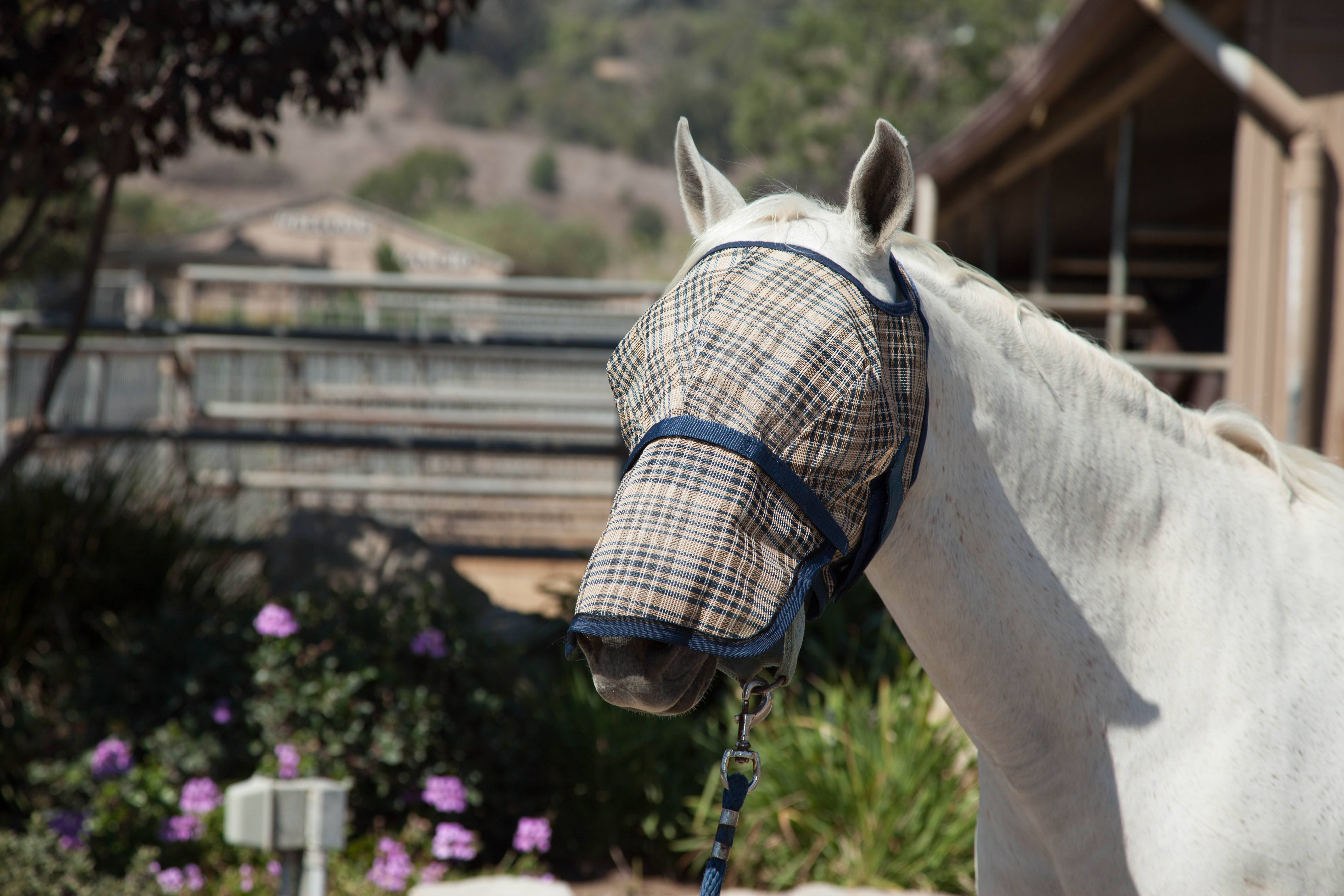 Kensington Protective Fly Mask with Removable Nose Piece