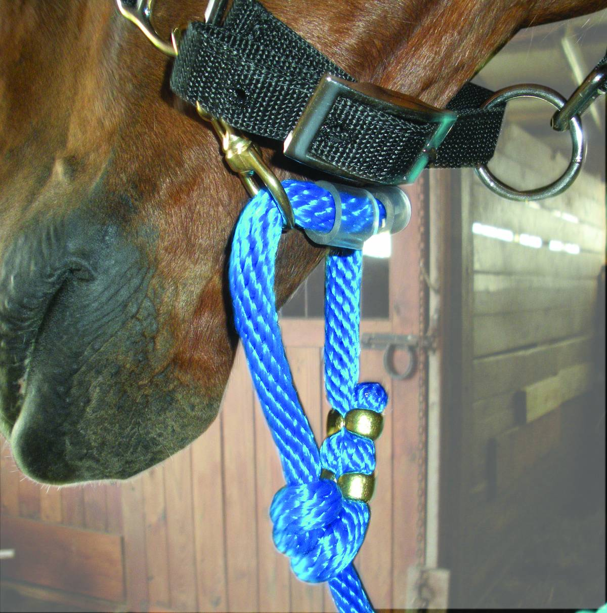Sound Equine Easy Lead