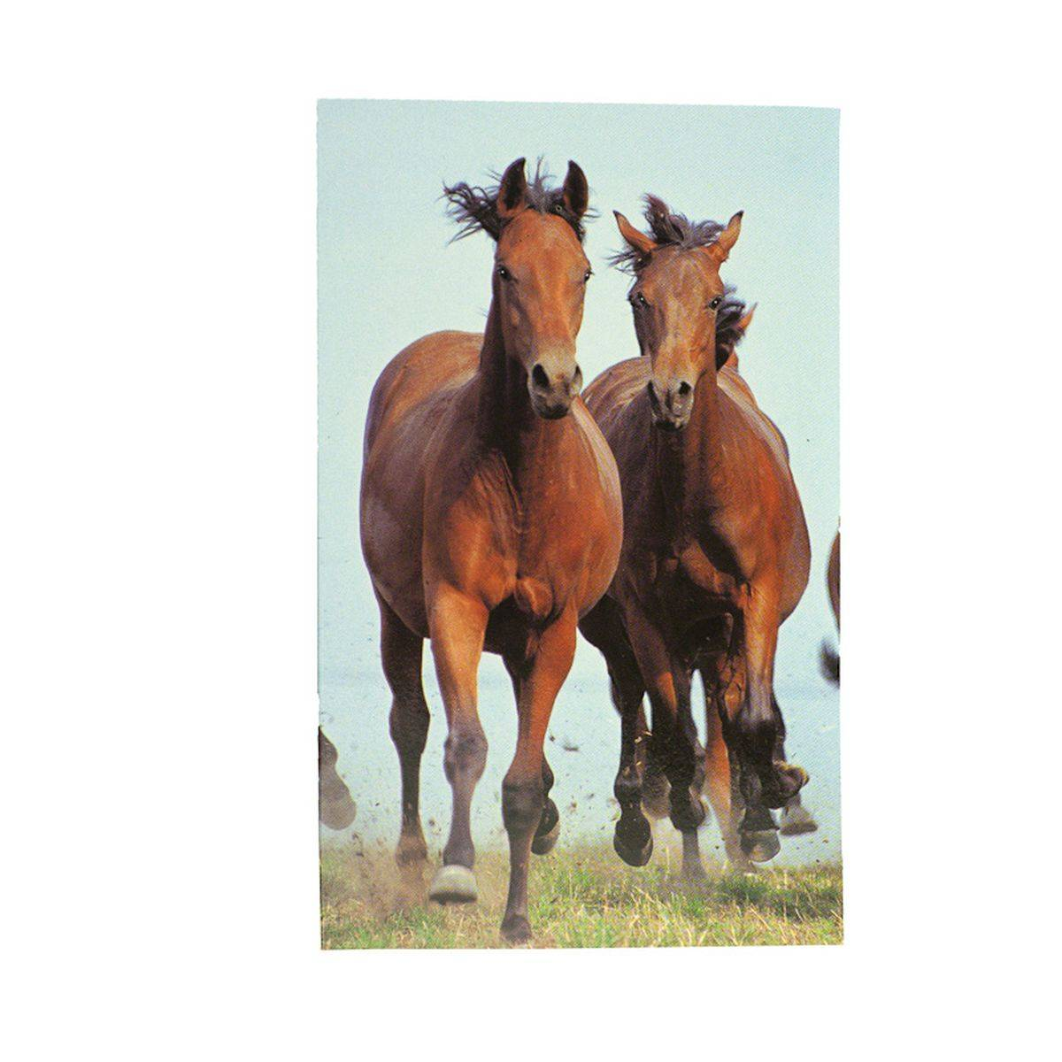 HorZe Notebook - Brown Horse