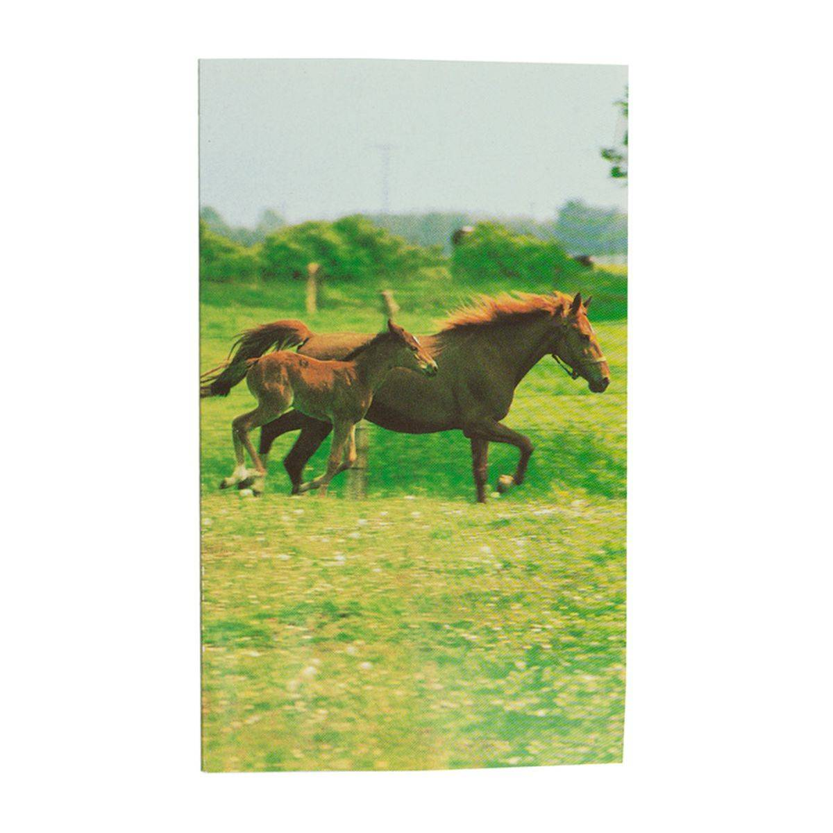 HorZe Notebook - Mare +Foal