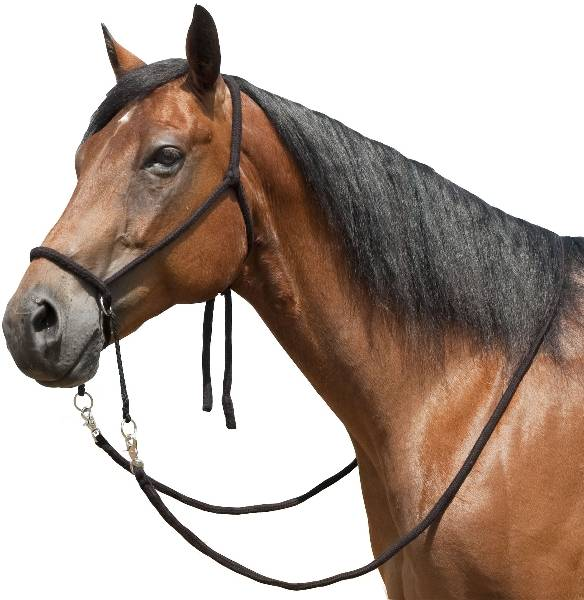 Bitless Bridle With Flat Braided Reins
