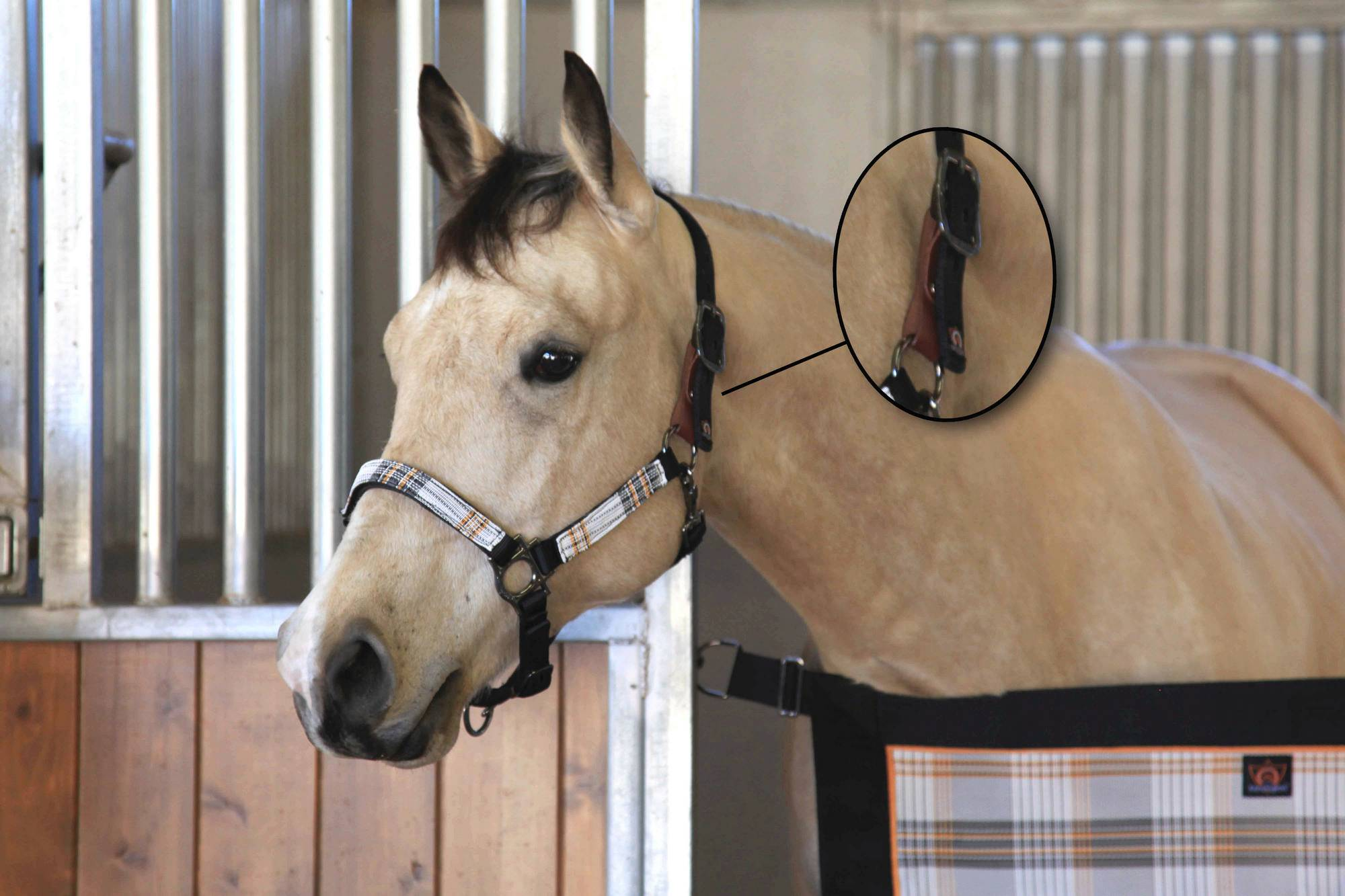 Kensington Breakaway Padded Halter Set