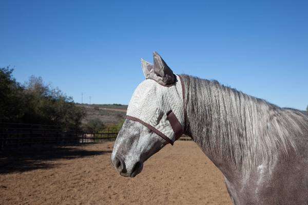 Kensington Natural Collection Protective Fly Mask with Ears
