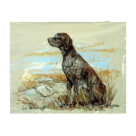 Short Haired German Pointer By: Gill Evans, Matted