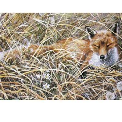 A Quiet Snooze (Fox) Blank Greeting Cards - 6 Pack