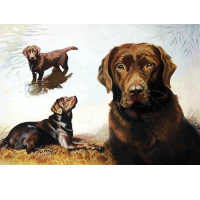 Chocolates (Labrador Retriever) Blank Greeting Cards - 6 Pack