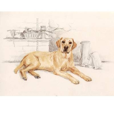 Yellow Lab By: David Thompson, Matted