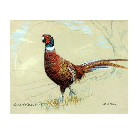 Pheasant By: Gill Evans, Matted