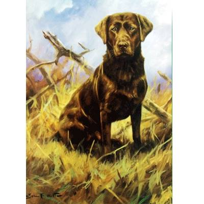 Chocolate Lab (Labrador Retriever) Blank Greeting Cards - 6 Pack