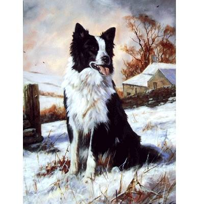 Ready to Work (Border Collie) Blank Greeting Cards - 6 Pack