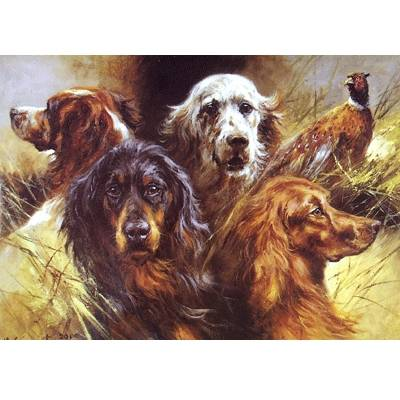 Setters (Gordon Setter, Irish Setter, English Setter) Blank Greeting Cards - 6 Pack