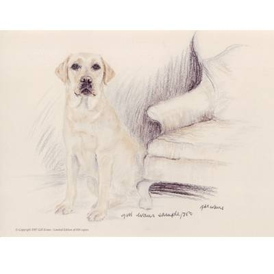 Yellow Lab By: Gill Evans, Matted
