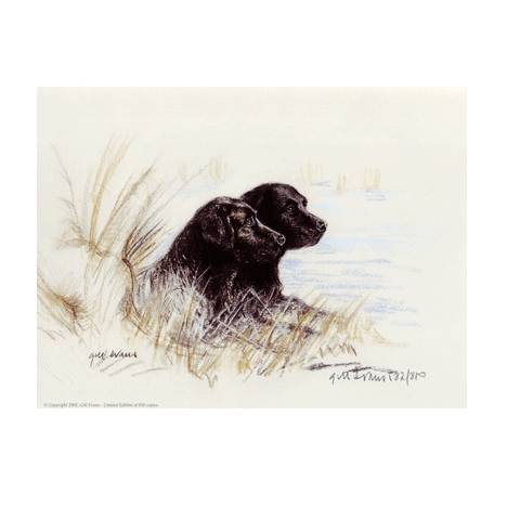 Black Labradors By: Gill Evans, Matted