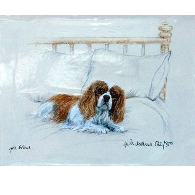 Cavalier King Charles Spaniel By: Gill Evans, Matted