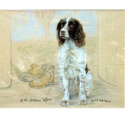 English Springer Spaniel By: Gill Evans