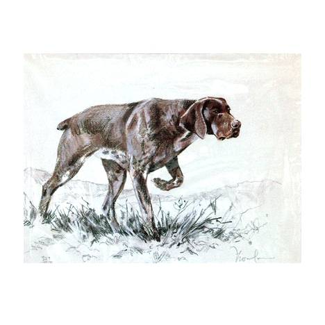 German Shorthair Pointer By: David Thompson, Matted