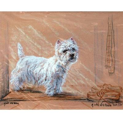 Westie by Shoes By: Gill Evans