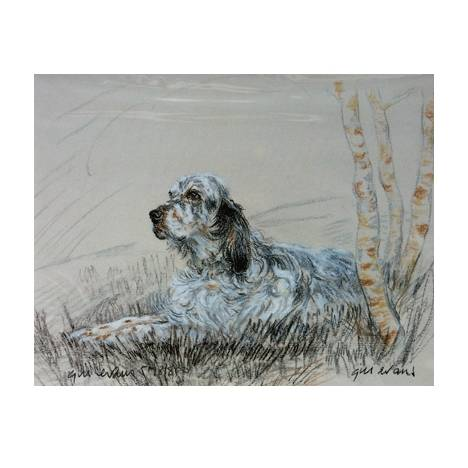 English Setter By: Gill Evans, Matted