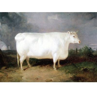 A Prize Cow Blank Greeting Cards - 6 Pack