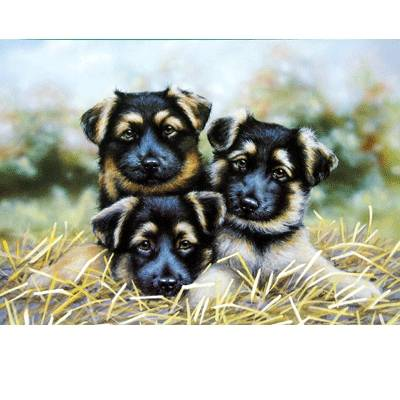 Eyes on You (German Shepherd) Blank Greeting Cards - 6 Pack