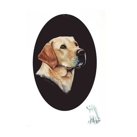 Yellow Lab by: Josephine Copley
