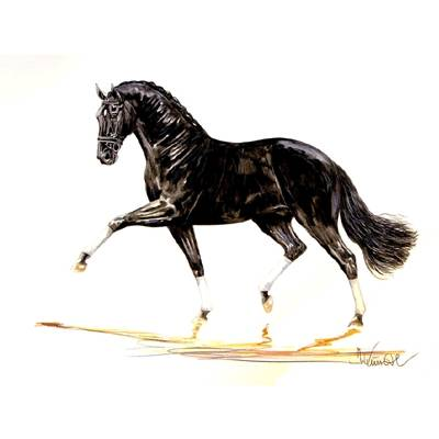 Bordeaux (Dressage) By: Jan Kunster