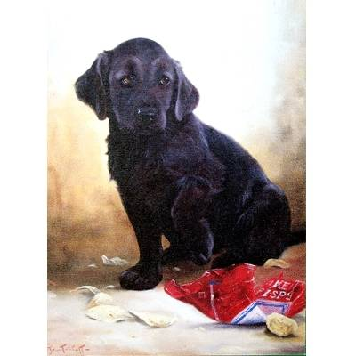 Sorry (Labrador Retriever) Blank Greeting Cards - 6 Pack