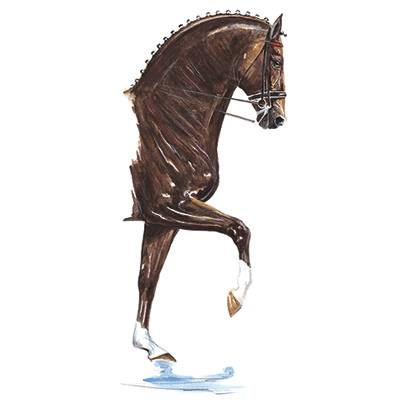 Donnerhall (Dressage) By: Jan Kunster. Matted