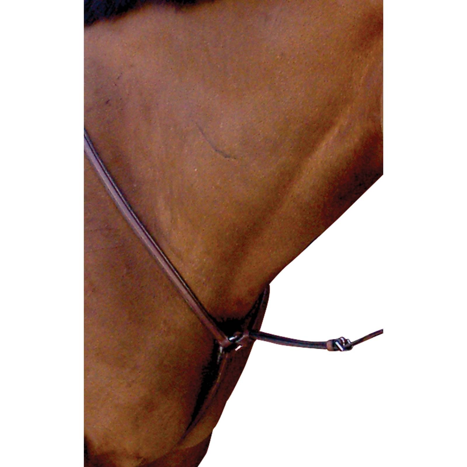 Toklat Passport Square Raised Breastplate with Standing Attachment