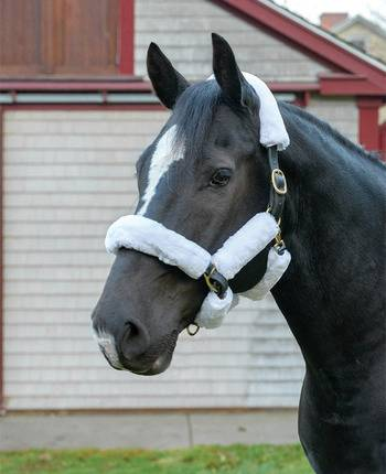 Shires Supafleece Halter Set