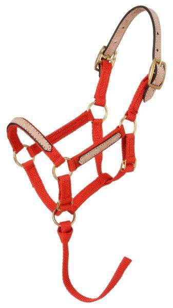 Tough-1 Miniature Nylon Breakaway Halters - 6 Pack