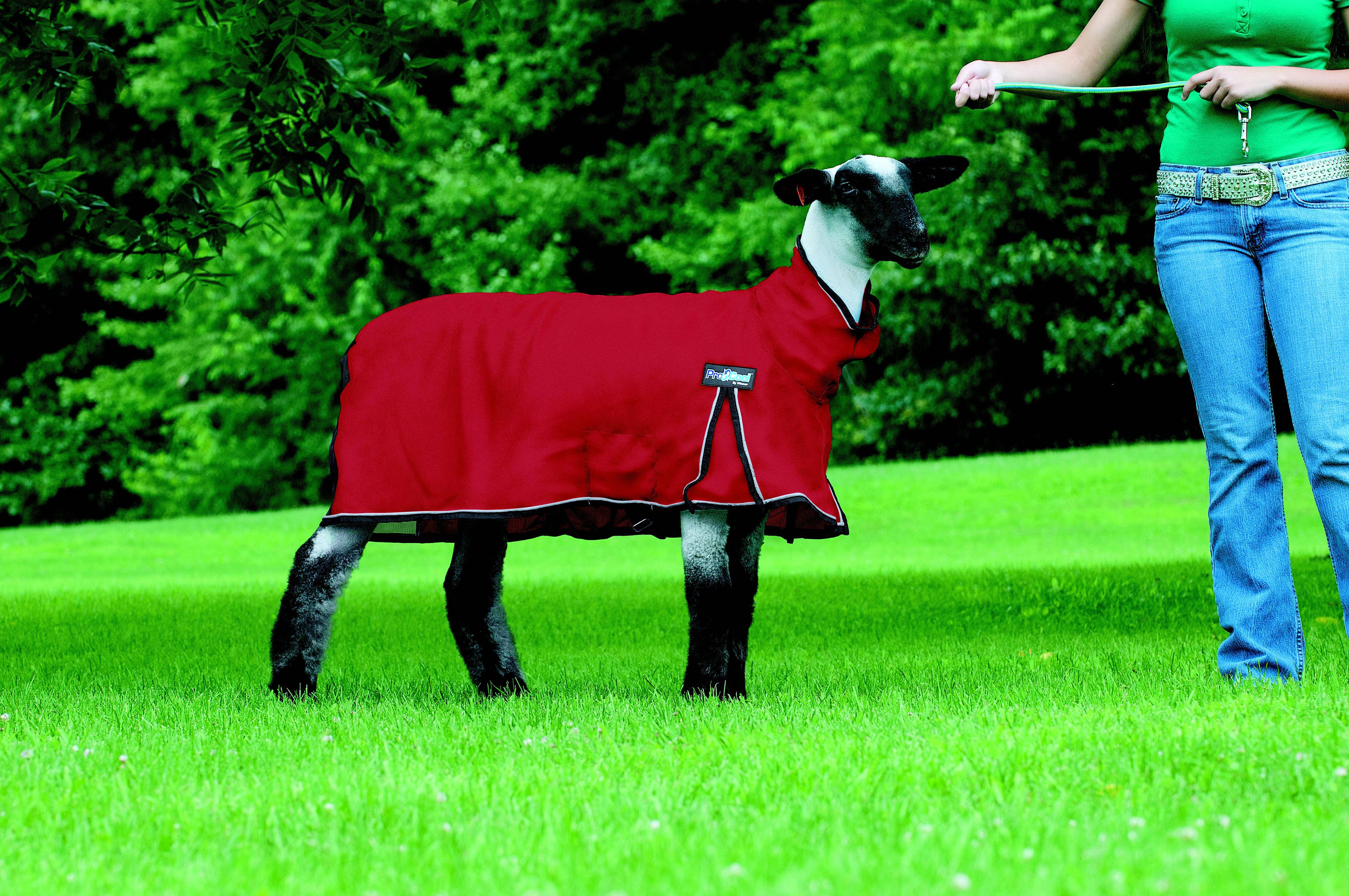 ProCool Mesh Sheep Blanket with Reflective Piping
