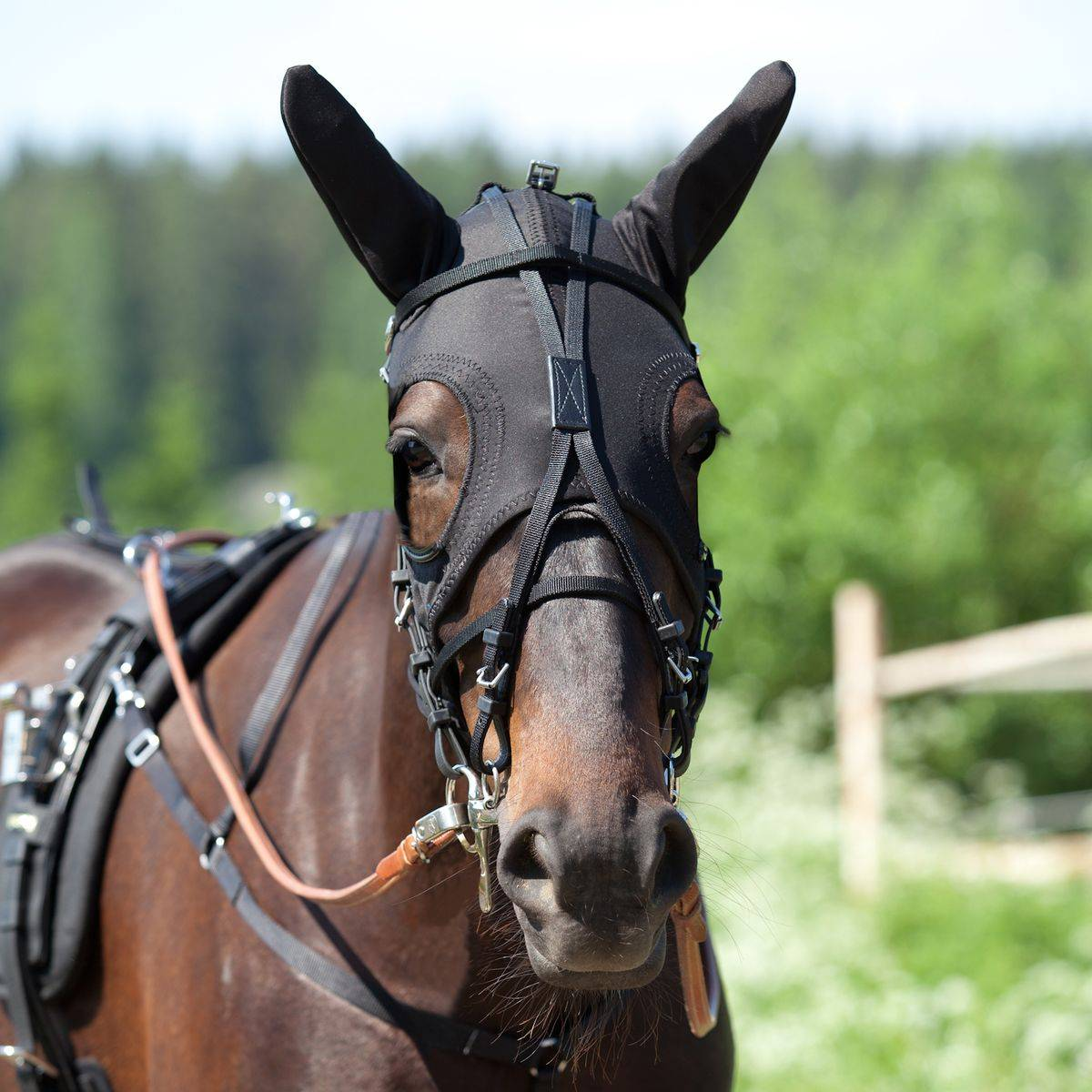 Finn Tack Face Hood with Ears