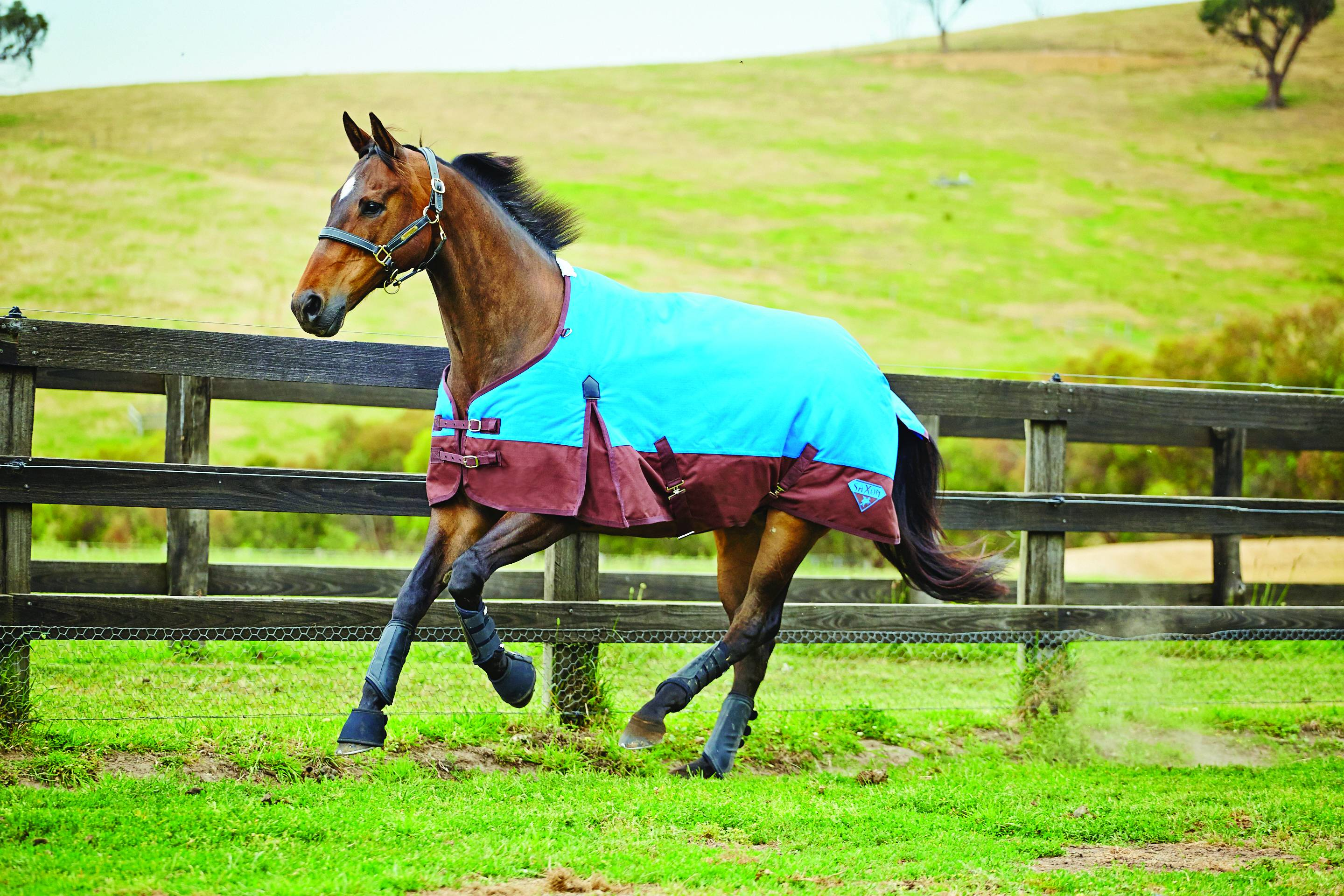 Saxon 1200D Standard Neck Turnout Blanket - Lightweight