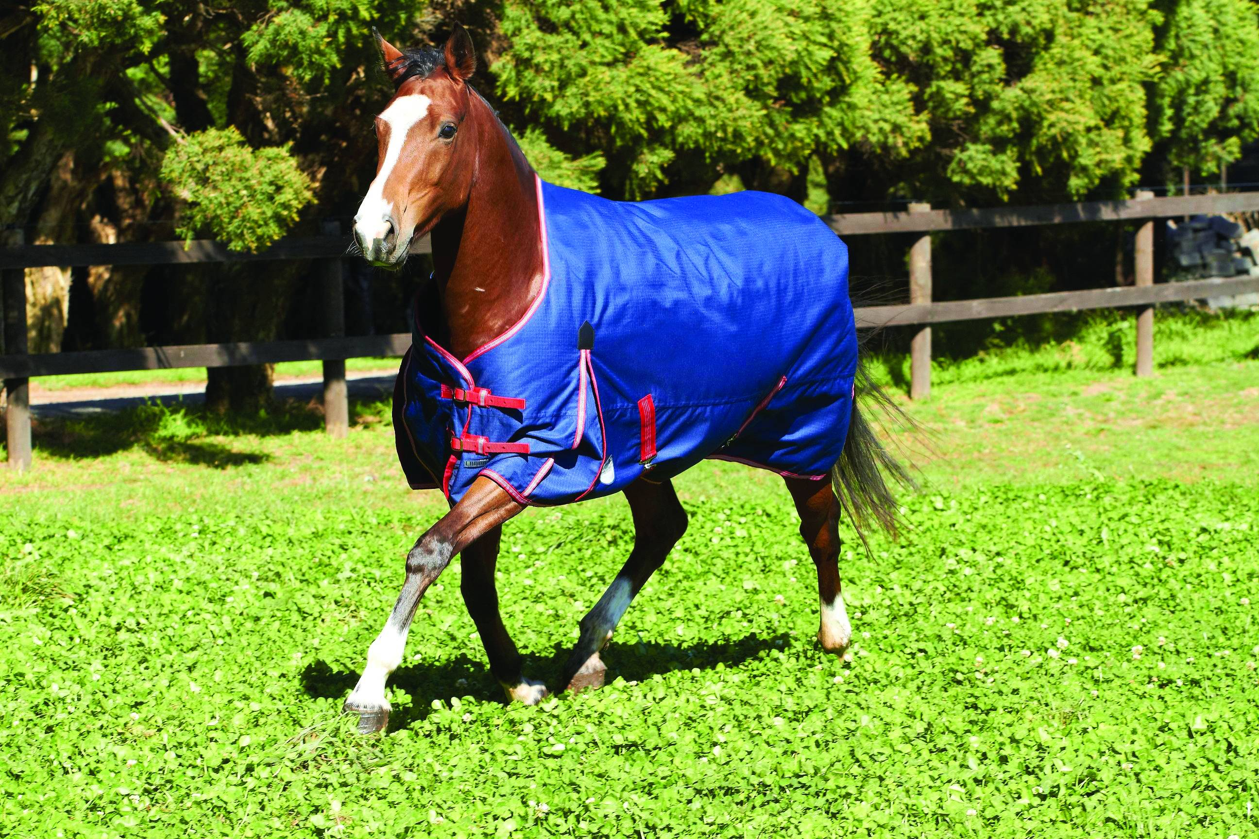 Weatherbeeta Original 1200D Standard Neck Turnout Blanket - Lightweight