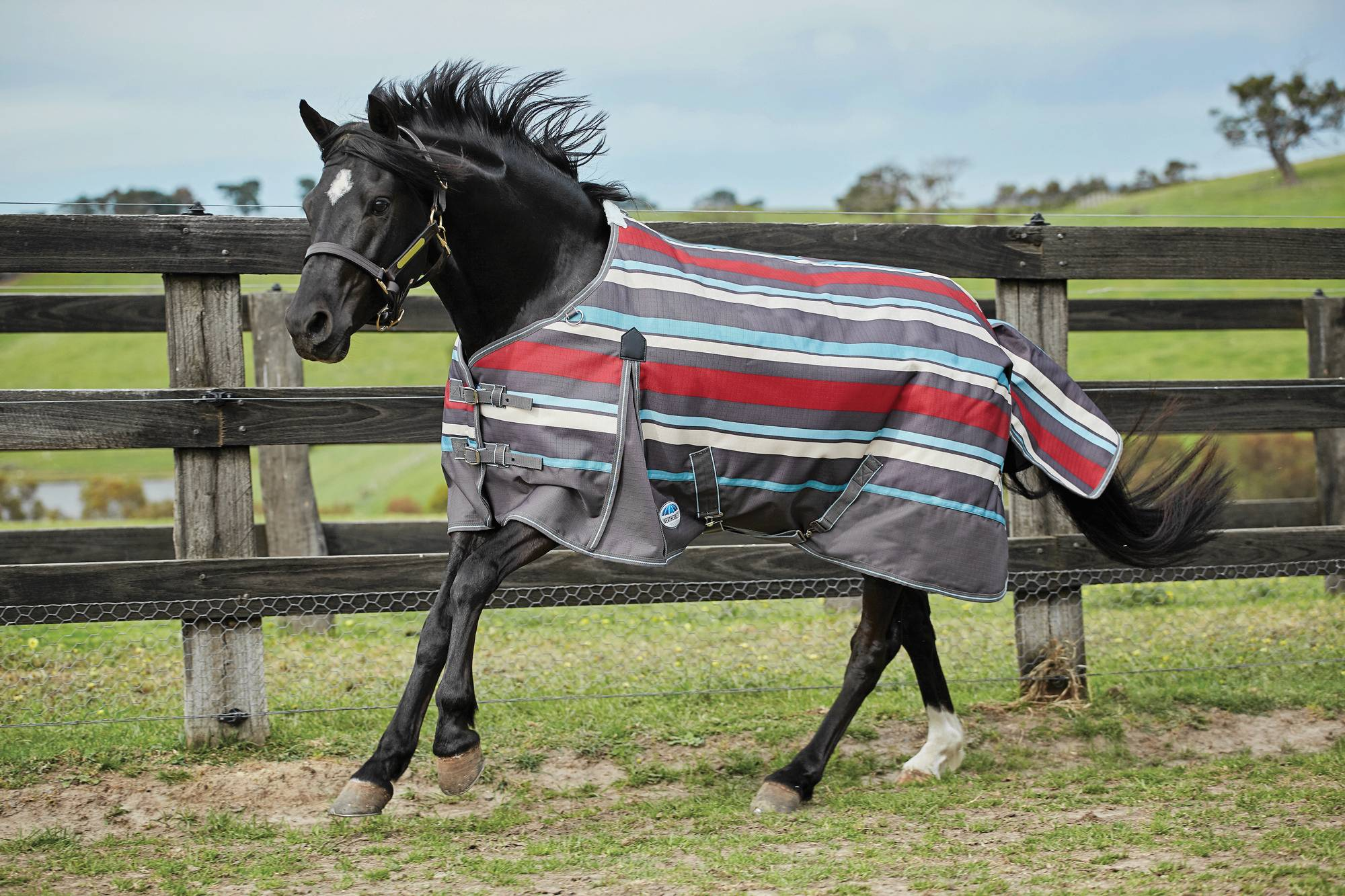 Weatherbeeta Original 1200D Standard Neck Medium Weight Pony Blanket