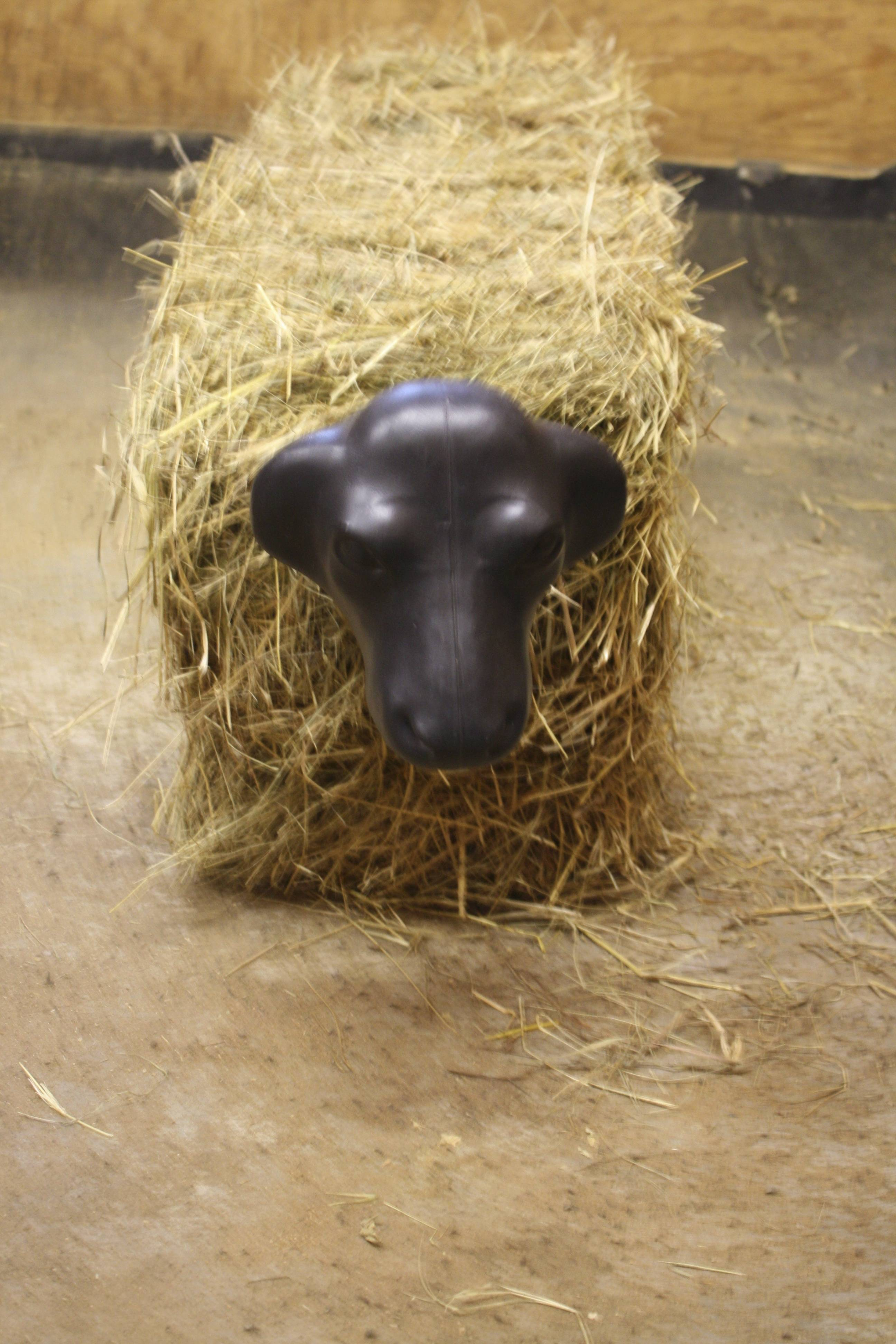 Calf Head with Hay Bale Spikes