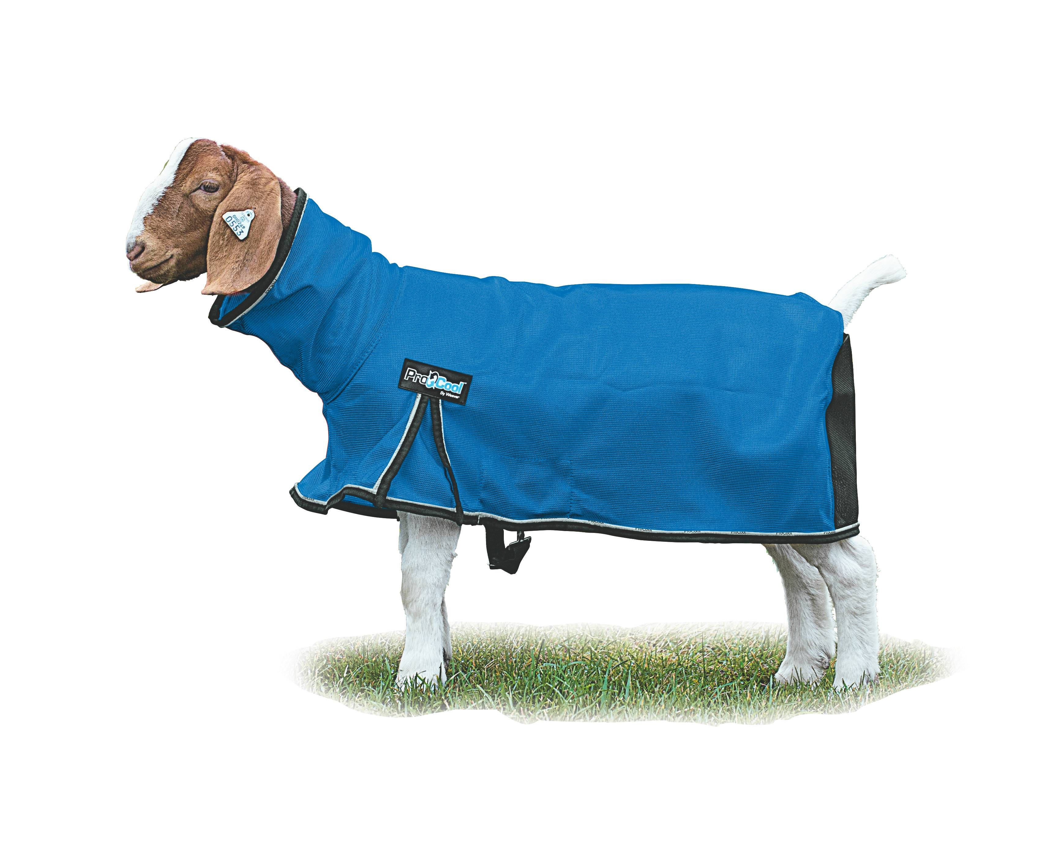 ProCool Mesh Goat Blanket with Reflective Piping