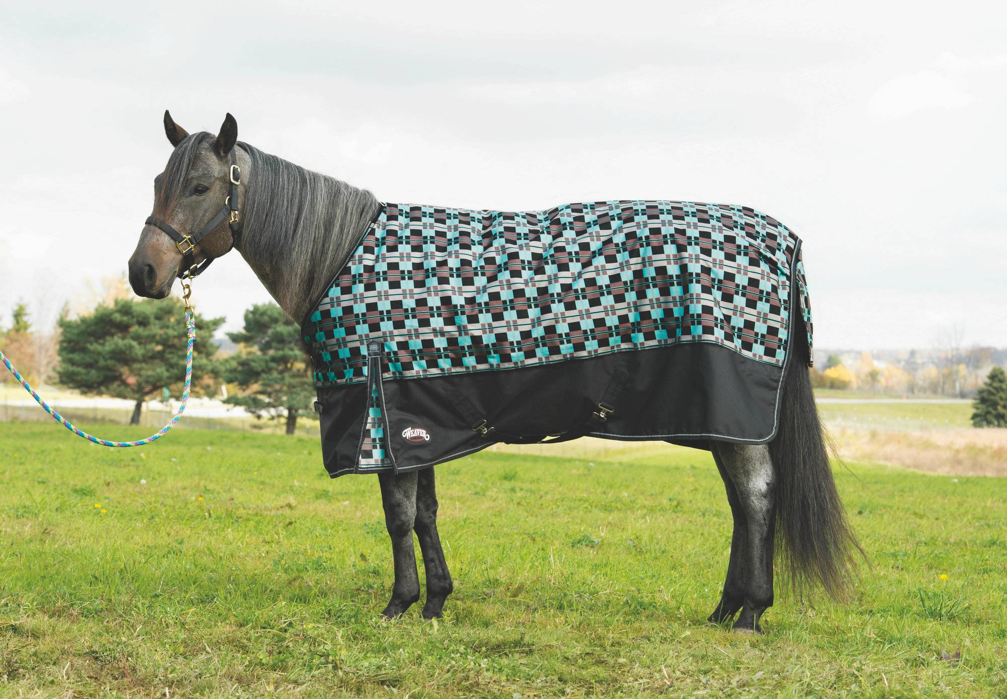 Weaver Premium Turnout Blanket