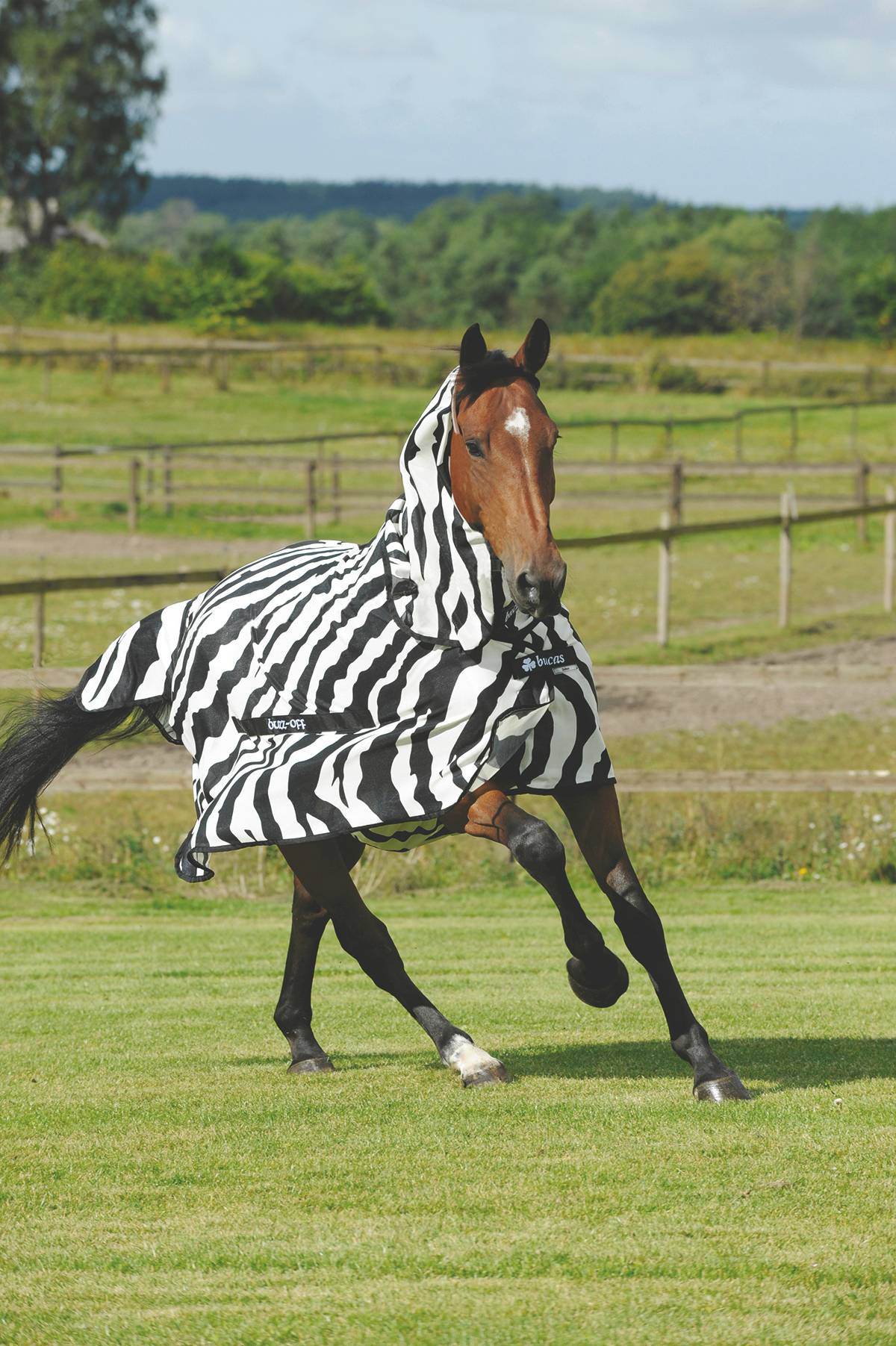 Bucas Buzz Off Zebra Fly Sheet, Hn - 69In
